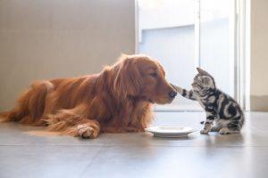 Comprendre la sociabilisation du chien
